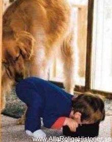 hund-barn