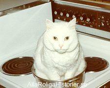 Mathumor i form av katt i kastrull.