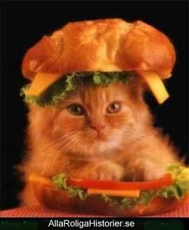 Roligt om mat. Katt-macka som är riktigt söt.