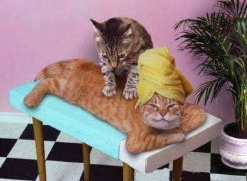 roliga-katter-massage
