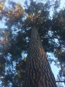 Skämt om naturen. Det barkar åt skogen.