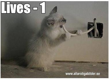 Ett bildsatt katt åt-skämt. Katt åt el - blev laddad.